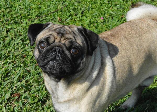 Vito, de hond van de dochter van de Argentijnse president Cristina Kirchner
